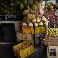Coconuts & Feline Friend